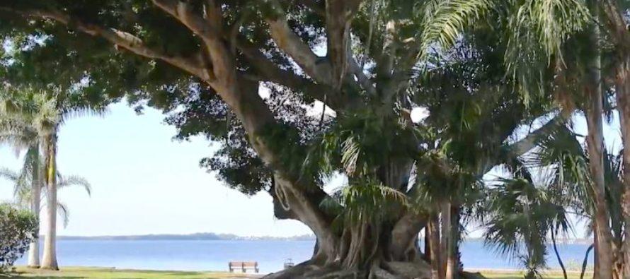 Activista por los árboles realizó una protesta creativa en el Concejo Municipal de Tampa para condenar la tala