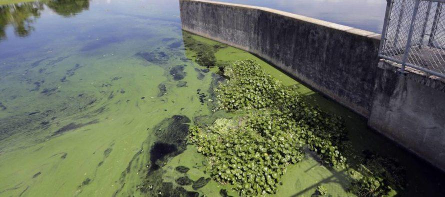 Residentes de Plantation preocupados por las algas verdes-azules en las vías fluviales