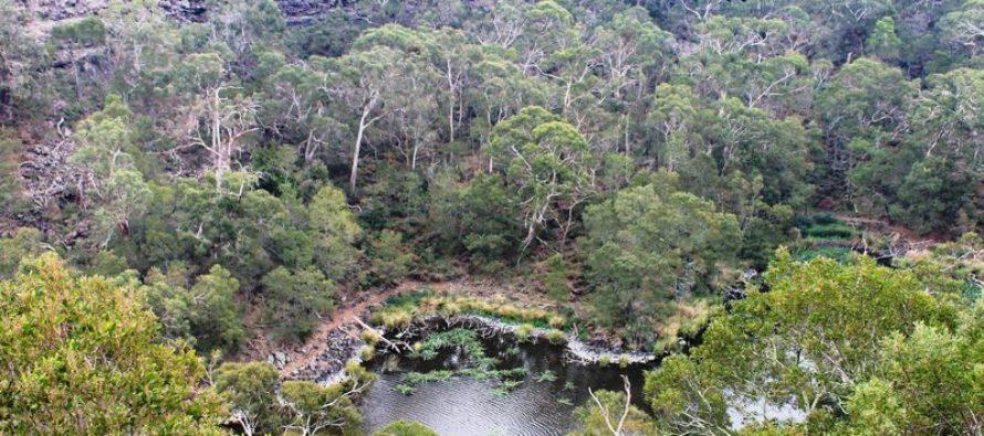 ¡Sorprendente! Incendios forestales de Australia revelan antiguo sistema de acuicultura