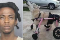 Arrestaron al que robó el carro y provocó muerte de perra discapacitada