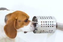 ¡Entérate! Confirman que los perros son capaces de detectar el cáncer en la sangre humana