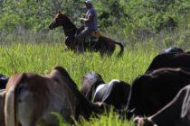 Carne paraguaya y pollo español para Cuba, pero ¿Donde están?