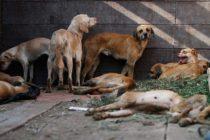 Desmantelan matadero ilegal en Broward: pollos, vacas, cabras y perros fueron rescatados