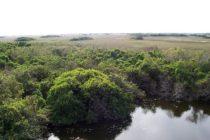 Descubre los Everglades, el parque natural subtropical más grande de EEUU