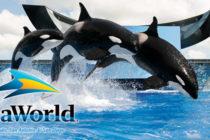Acciones de SeaWorld se disparan casi un 17% por aumento de asistencia