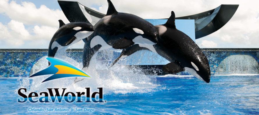 Sea World abre 9 nuevas atracciones en todo el país