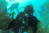 Organizaciones de Florida trabajan para erradicar este peligroso pez