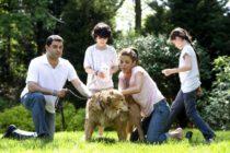 UniVista: Si tu perro muerde al vecino, tu póliza te cubrirá