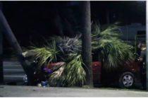 Palmera mata a una mujer en Miami