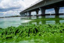 ¿Cómo está afectando a los negocios de Florida la crisis con las algas tóxicas?
