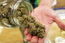 El comercio de la marihuana también tiene su mercado en Florida