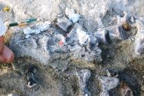 Científicos descubren la mayor huella de dinosaurio encontrada hasta ahora