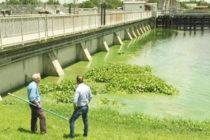 Algas tóxicas del lago Okeechobee pueden causar serios daños a la salud