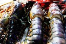 Pescadores de langostas en Florida serían afectados por impuestos chinos