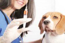 Autoridades de Boca Ratón emiten alerta tras confirmar casos de rabia en animales