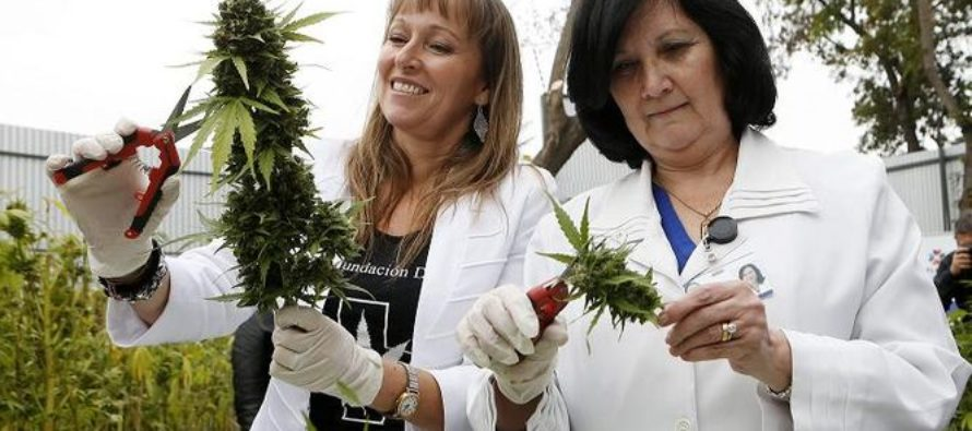 Marihuana Medicinal en Florida legal pero no tan accesible