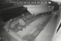 Vea como roban una embarcación de una casa en Miami-Dade (Video)