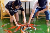 Cafetería inundada donde los peces nadan entre las mesas