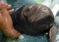 Manatí y a su cría heridos fueron rescatados en Florida