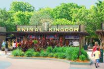 Parque temático Animal Kingdom celebra el nacimiento de un bebé mandril