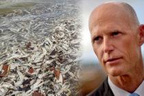 El Gobernador de Florida declara emergencia en siete condados por marea roja