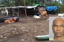 Activistas rescatan animales abandonados de una granja de Palm Beach