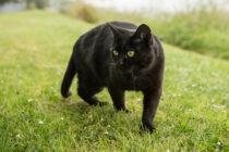 Día Mundial del Gato: conoce los misterios sobre estos felinos