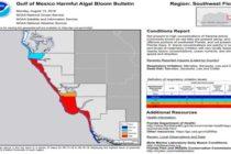 Científicos de la NOAA usan satélites para seguir la marea roja