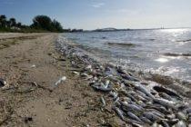 Autoridades emiten alerta de peligro de playa por alga tóxica en las costas de Florida