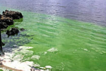 Crisis de las algas crece por reducción del monitoreo en aguas de Florida