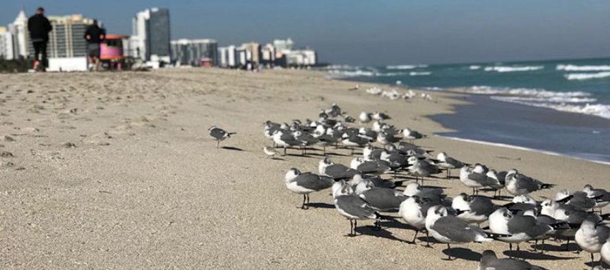 La marea roja ya comienza a perjudicar el turismo en Florida