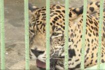 Violencia en Nicaragua está llevando a un zoológico a la quiebra
