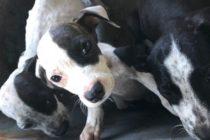 Rescatan de la muerte en Florida a tres cachorros abandonados a su suerte dentro de un cubo
