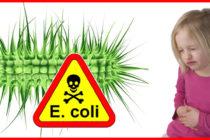 Alertan sobre brote de E.coli vinculado a la carne molida de res en todo EE. UU.
