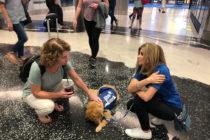 ¡Tienen cuatro patas y son los nuevos terapistas del aeropuerto de Miami !