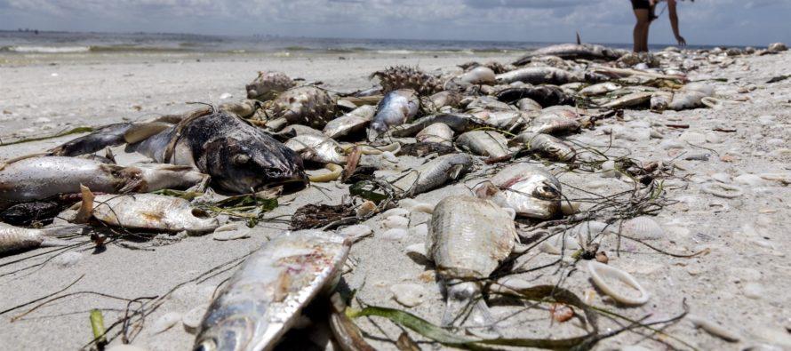 Reportan problemas de salud en Florida por marea roja tóxica