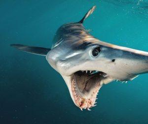 Reportan otro presunto ataque tiburón cerca de Miami Beach