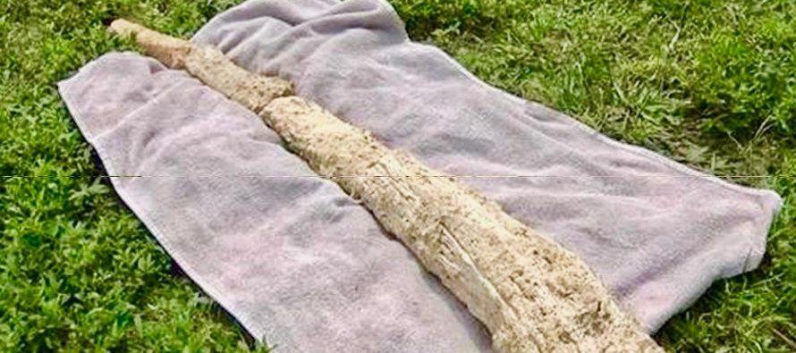 Hallan posible colmillo fosilizado de mamut en excavación de Cape Coral