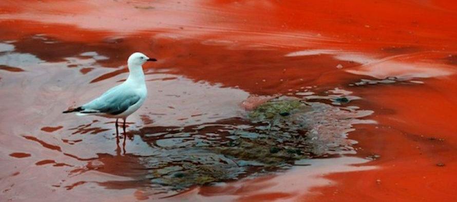 ¡Atención! La terrible marea roja avanza hacia las costas de Florida