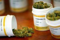 Implementación de marihuana medicinal debería ser más efectiva en Florida