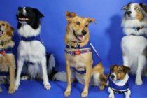 Perros para calmar a viajeros tendrán en el aeropuerto de Miami