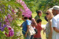 Programa Fairchild Million: promueve la plantación de orquídeas en el sur de la Florida