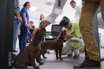 Condado de Miami-Dade busca voluntarios que colaboren con las mascotas