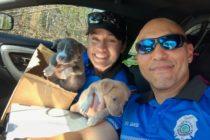 Policía de Miami Beach rescató a cuatro cachorros huérfanos tras huracán Michael