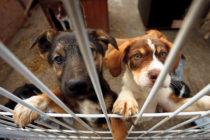 Este 21 de junio realizarán adopciones de perros y gatos en Miami-Dade