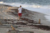 Marea roja se desplaza a lo largo de 100 millas en la costa este de Florida