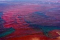 Tras 16 meses y toneladas de peces muertos, se disipa la Marea Roja en la Florida