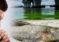 Marea roja tóxica insiste en permanecer en costa de Florida