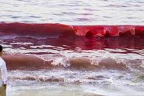 Floración de marea roja tóxica abraza las costas del estado de Florida