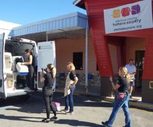 Mascotas rescatadas de la Florida son llevadas a Chicago